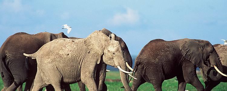 Kleingruppen-Safari