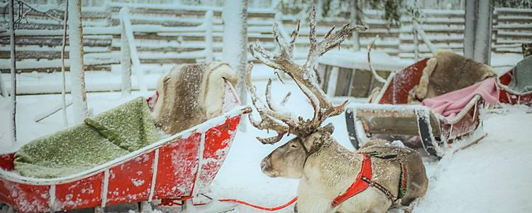 Weihnachten in der Heimat des Weihnachtsmannes