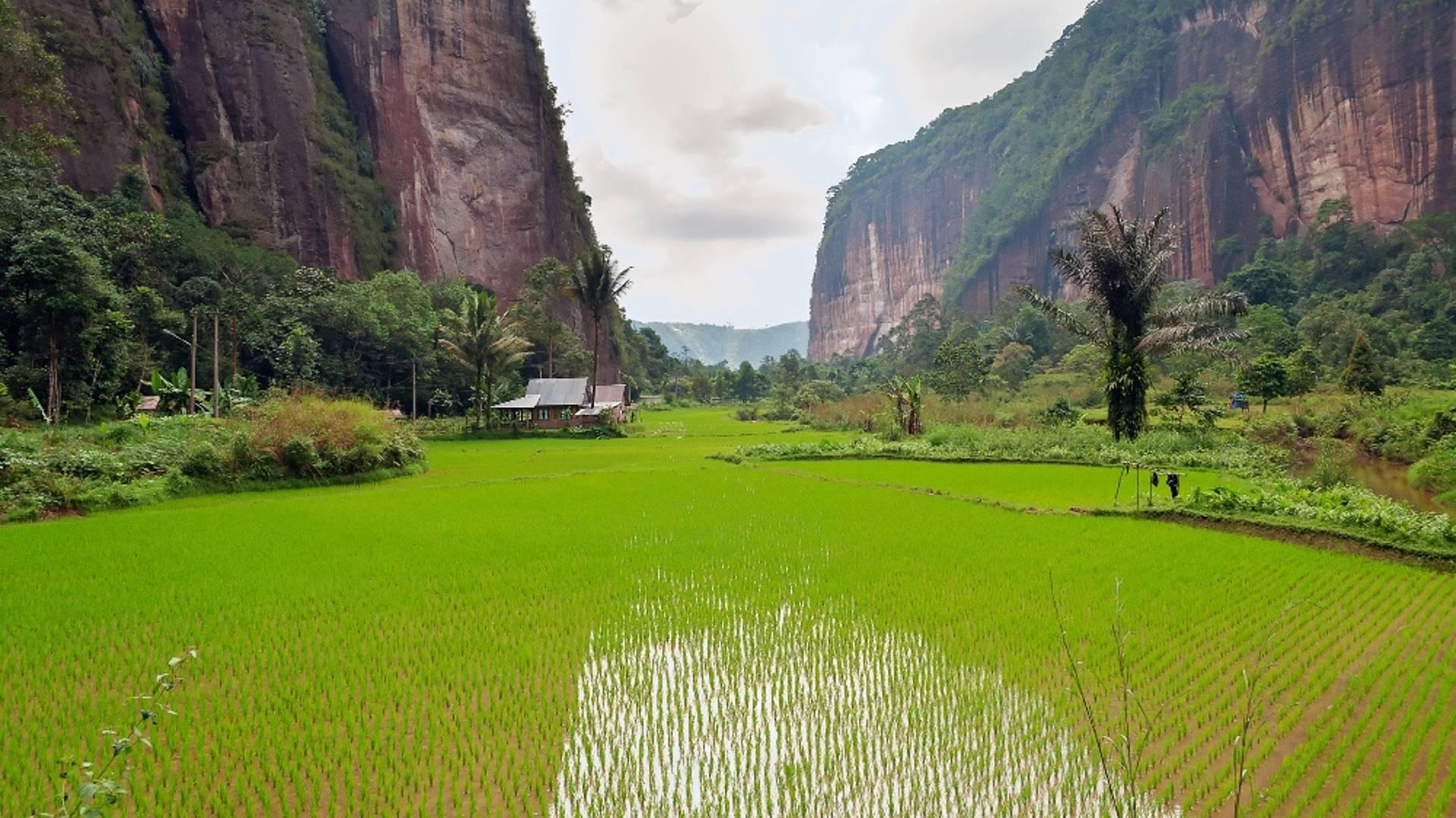 Orang Utans, Natur und Kultur in Nordsumatra