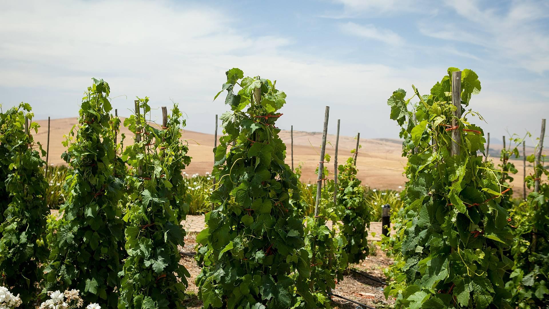 Zauber der Winelands - exklusive Weintour für Liebhaber und Neugierige