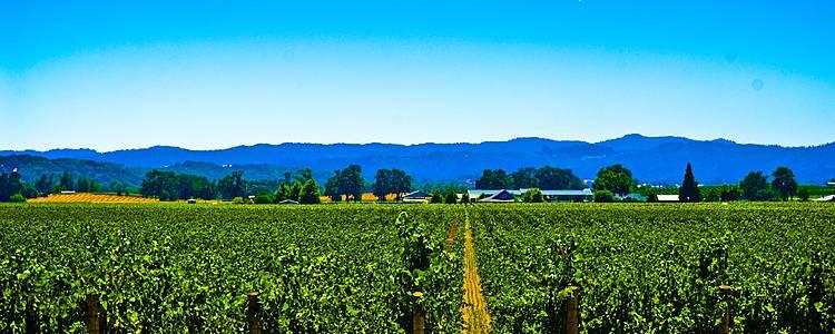 La strada dei vini e la Highway One