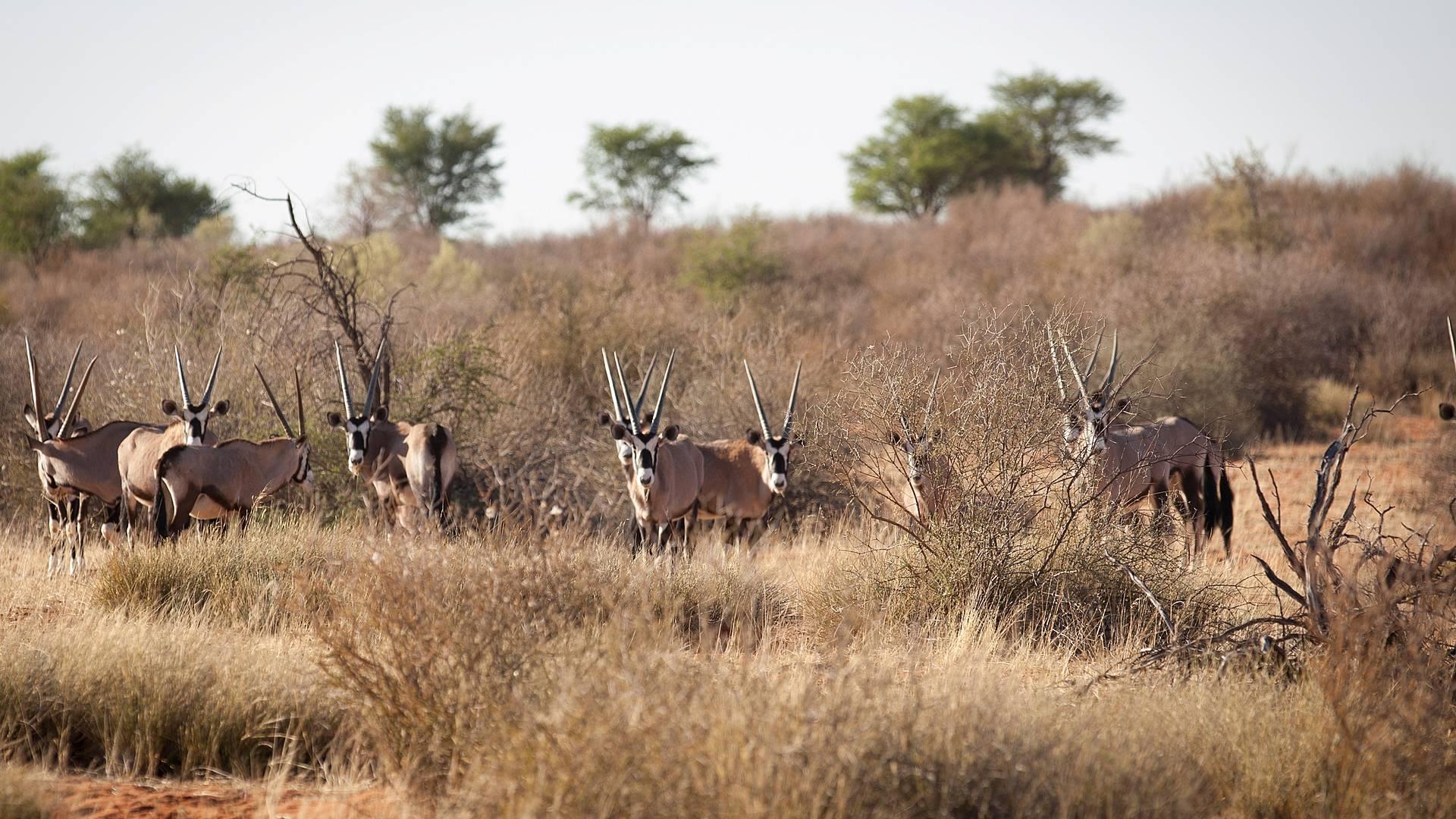 Wüsten, Canyons, Geisterstädte - von Windhoek nach Kaptstadt für Entdecker
