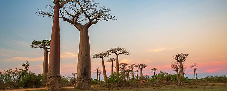 Aventura entre Baobabs en grupo reducido