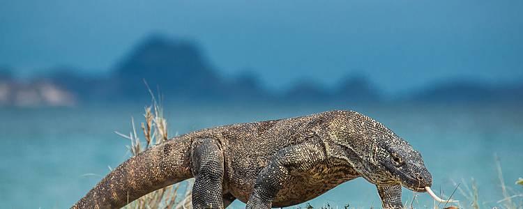 Cultuur en ongekende natuur op Flores en Komodo