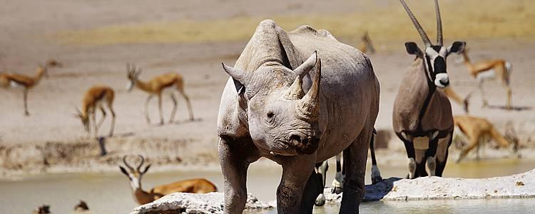Auf den Spuren von wilden Tieren und den San Bushman