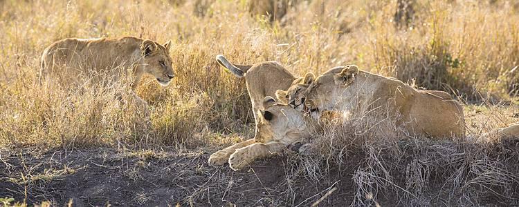 Safari Mlima