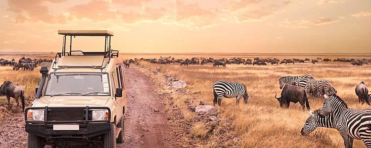 Safari Kweli