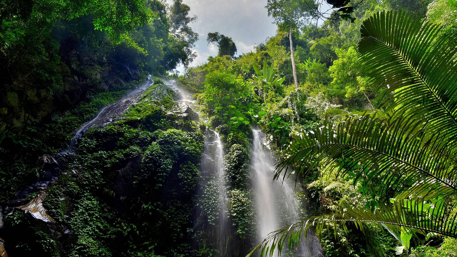 Selva e historia en Malasia