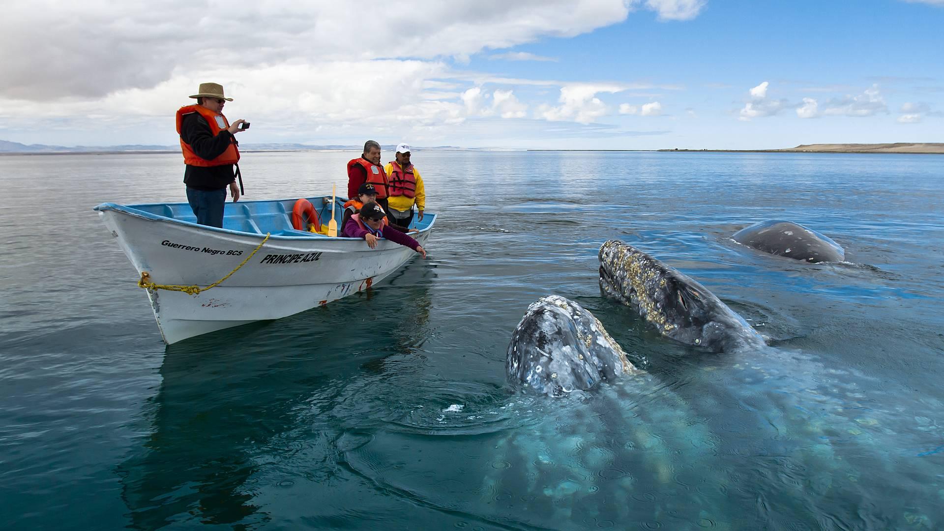 Faszination Wale