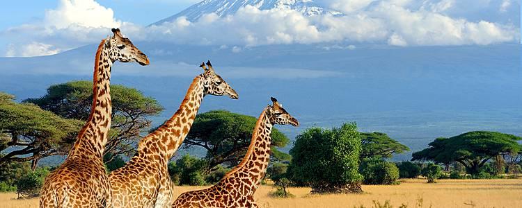 Express Reise mit Sansibar