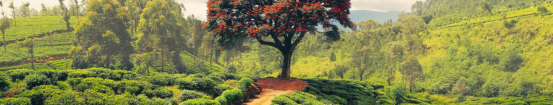 Voyage nature au Sri Lanka