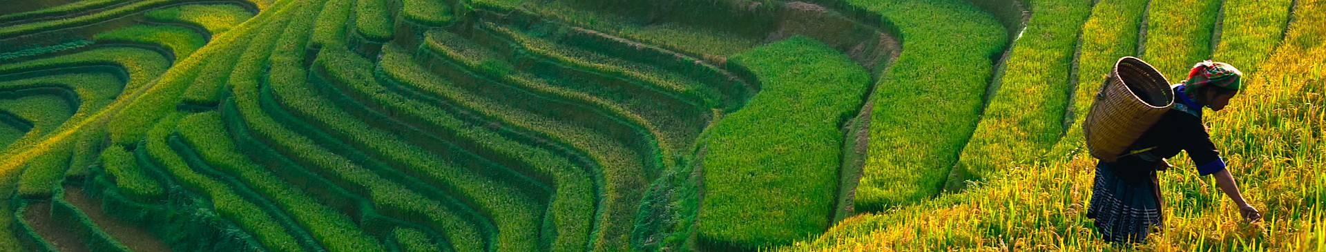Voyage nature au Vietnam