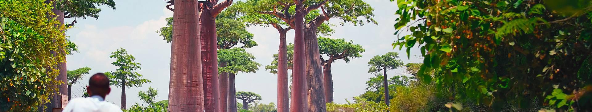 Voyage nature à Madagascar