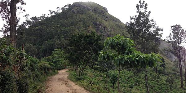 El pequeño pico de Adán