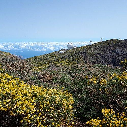 La Palma, isla bonita à pied et en liberté - Santa Cruz de Ténérife -