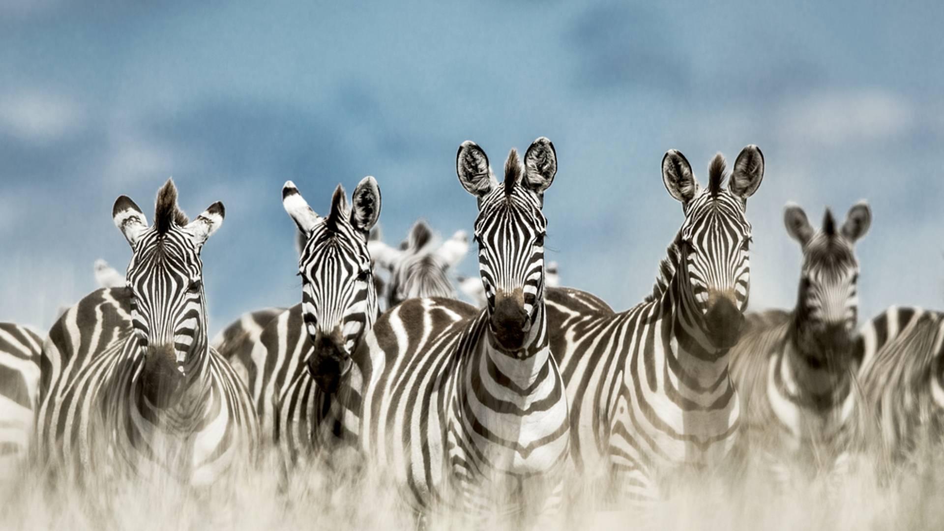 L'essentiel du Nord de Tarangire au Serengeti