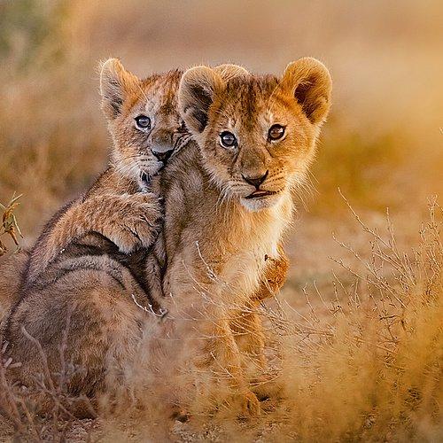 Duo Safari sud Tanzanie et détente à Zanzibar -