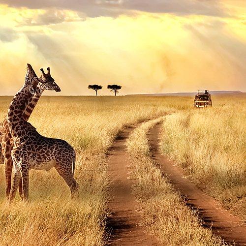 Rencontres et safaris - Arusha -