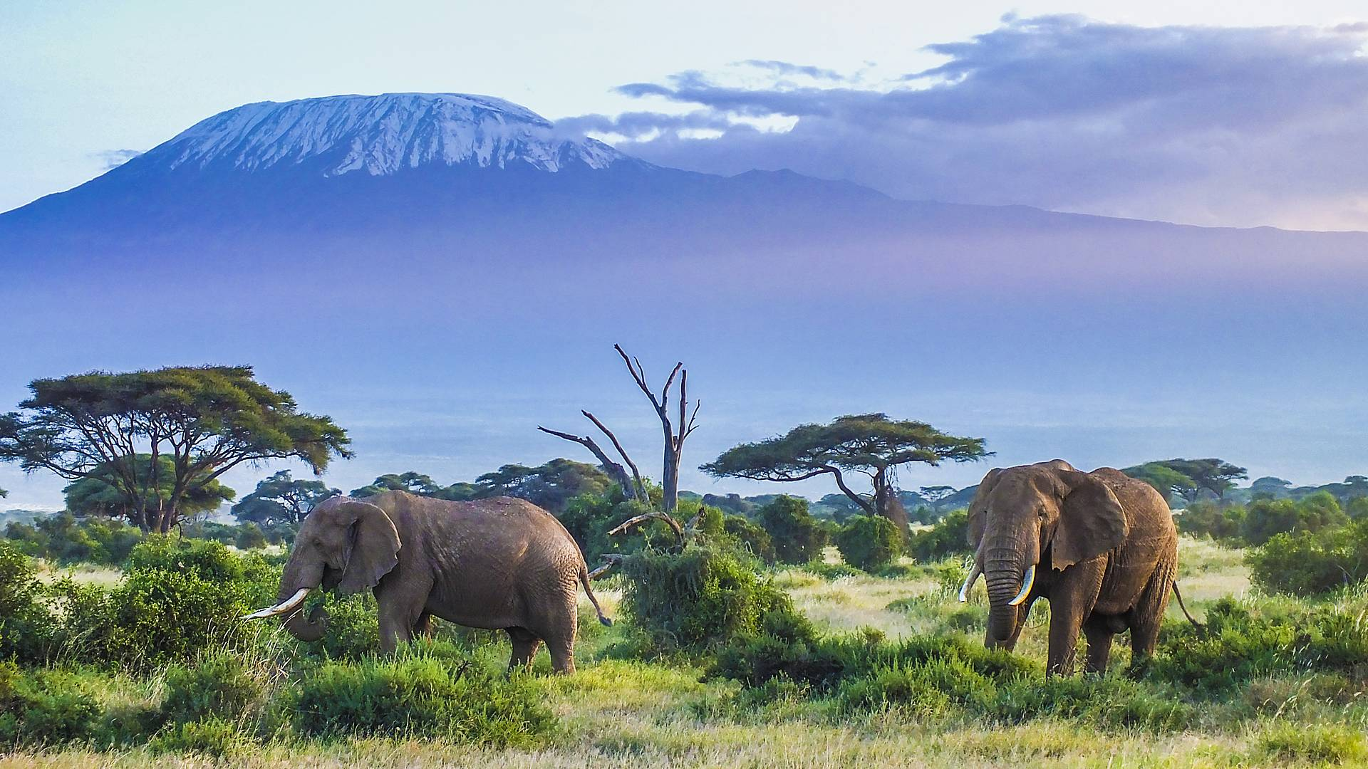 Kenya-Tanzanie, duo fabuleux