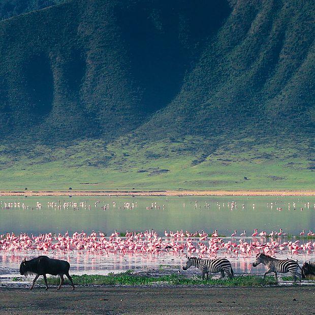 Cebras y ñus en el cráter de Ngorongoro, Tanzania