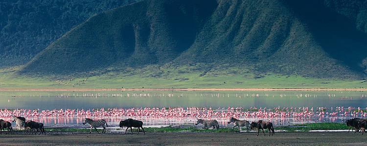 Safari privato dai parchi del nord alle spiagge di Zanzibar