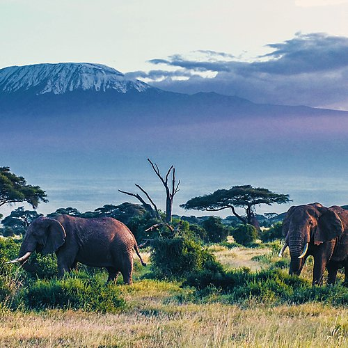 Du Kilimandjaro à l'Océan Indien en bivouac - Arusha -