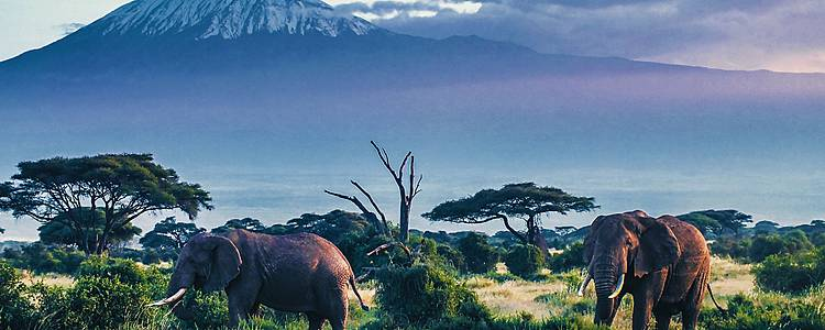 Du Kilimandjaro à l'Océan Indien en bivouac