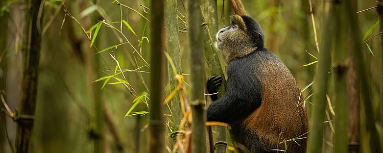 Safari Nyani, la ruta de los simios