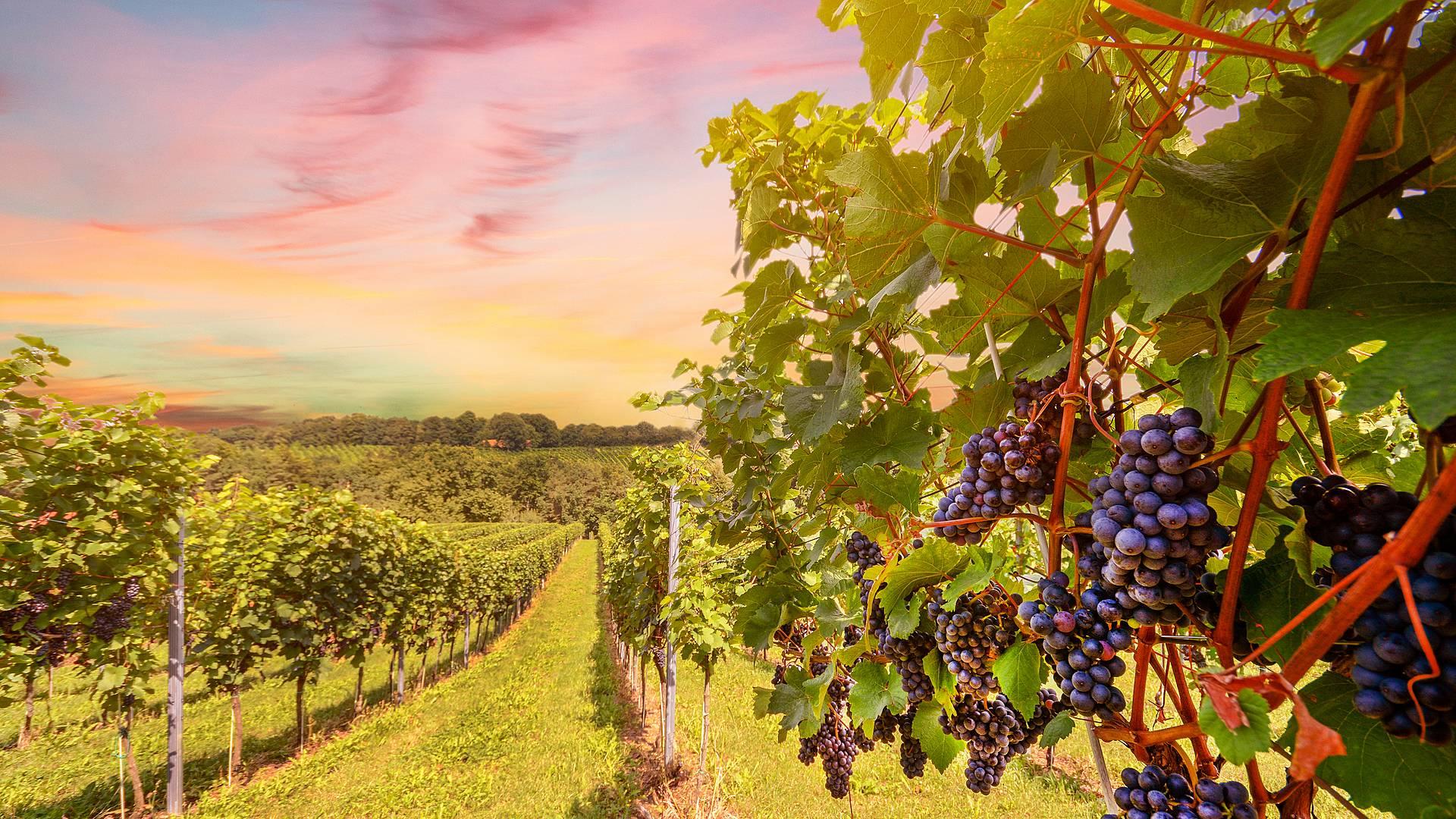 Gastronomía y vino en Eslovenia