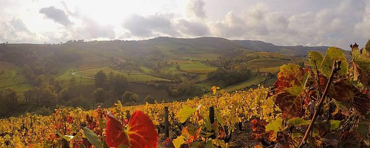 Burgund: Üppige Weinberge und historische Baudenkmäler