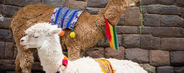 Inca Empire for families