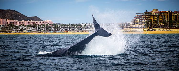 Whale Watching auf der Baja California