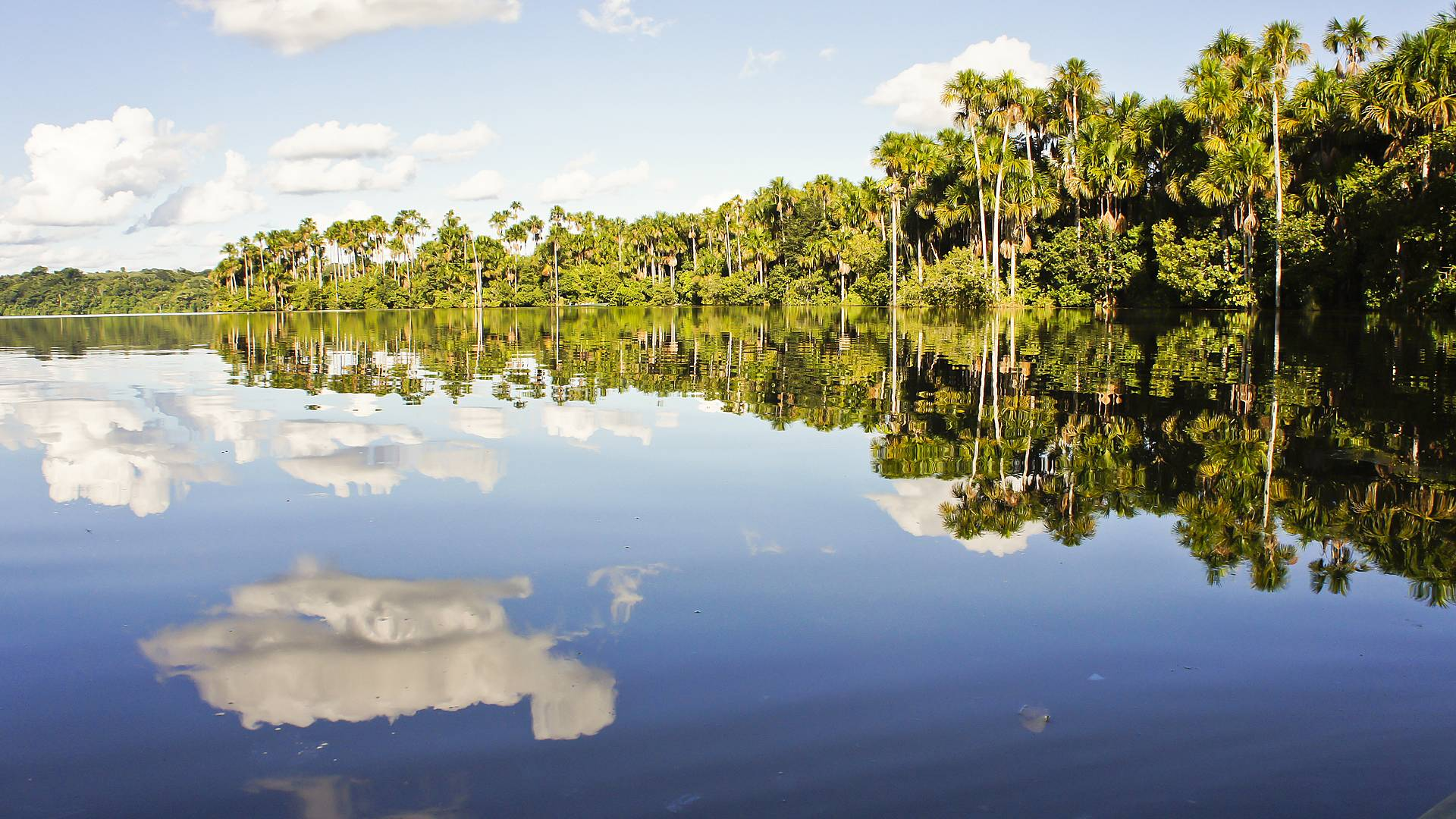 Terres sacrées et Amazonie