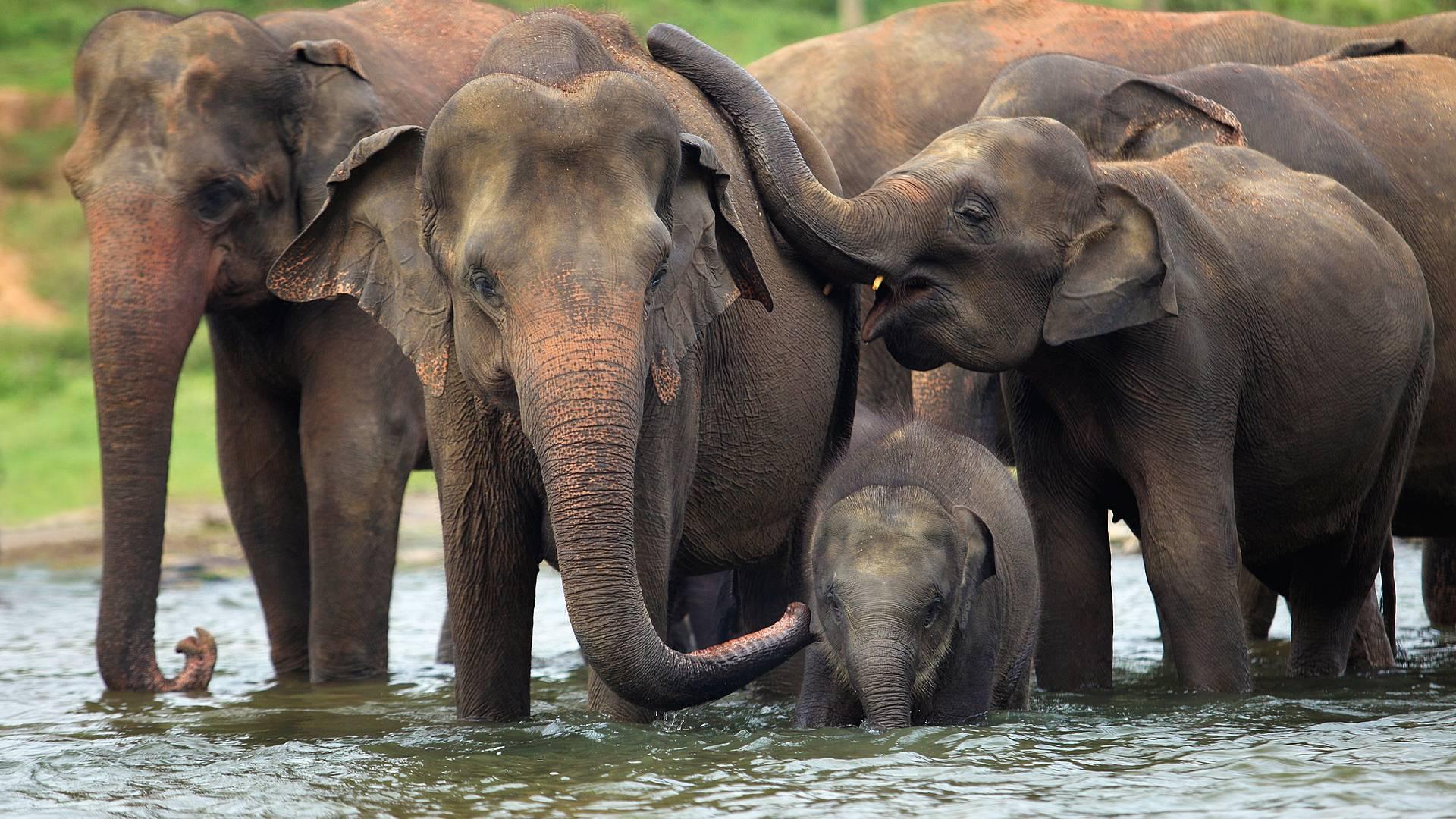 ¡Descubre la tierra de elefantes!