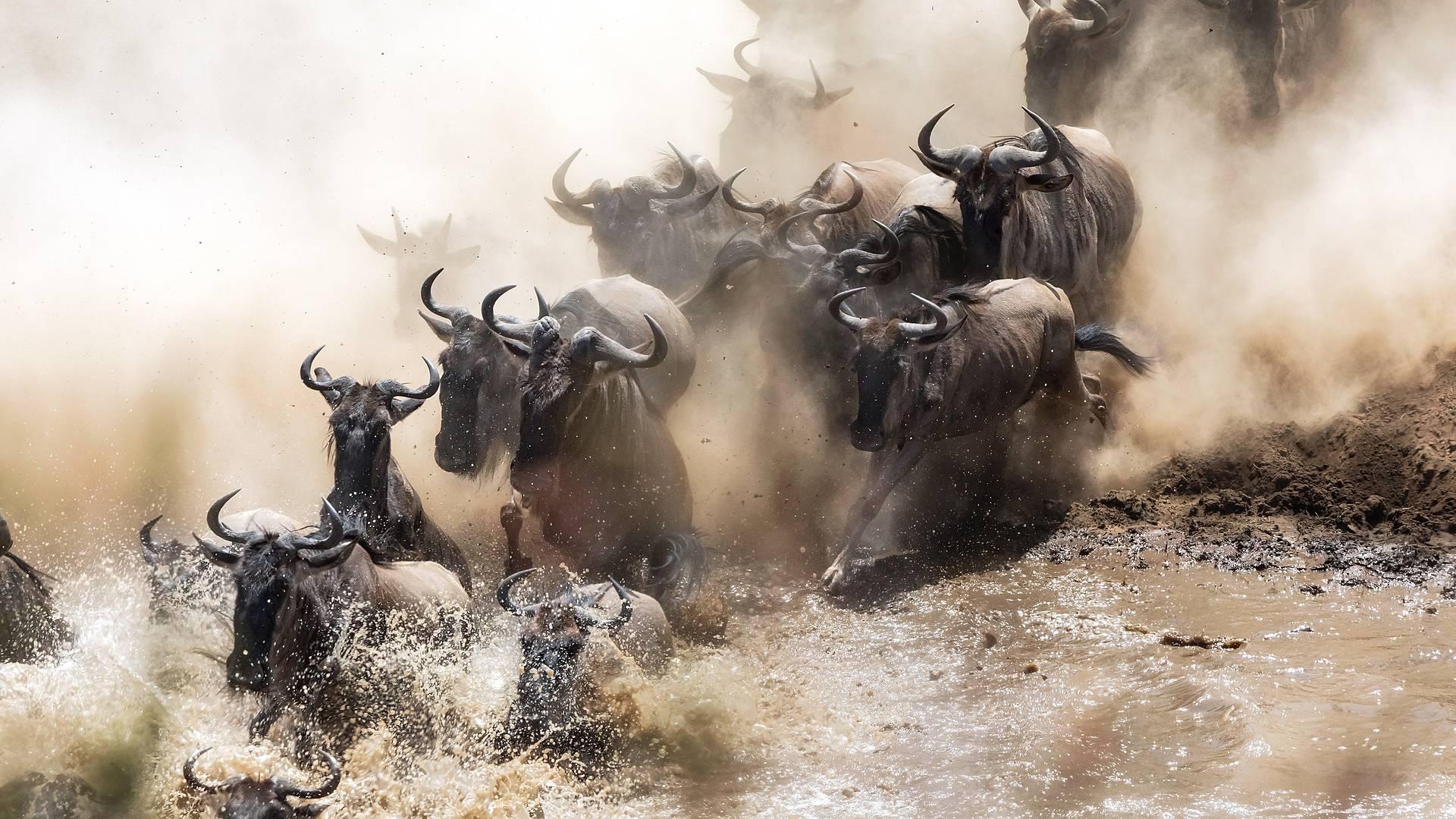Cultura Masai y safaris en Kenia
