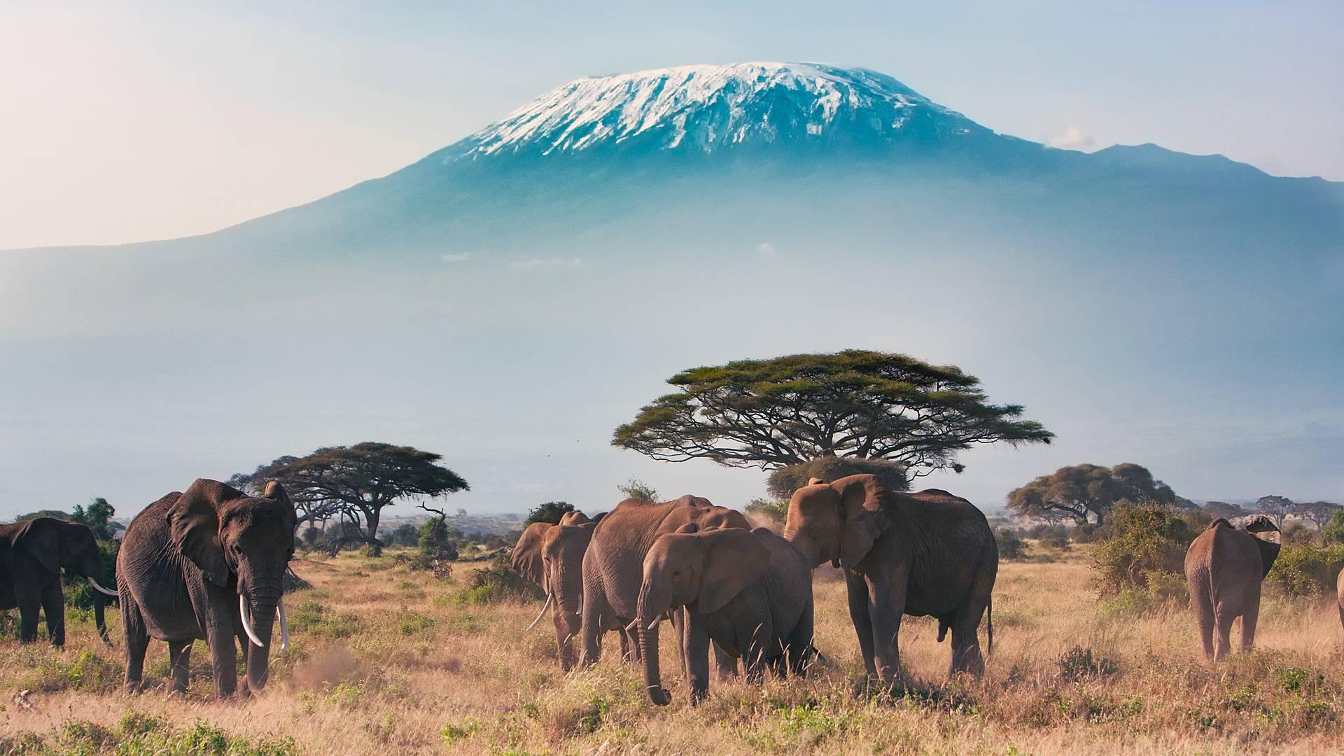 Safari, Kilimandscharo und Strandzeit