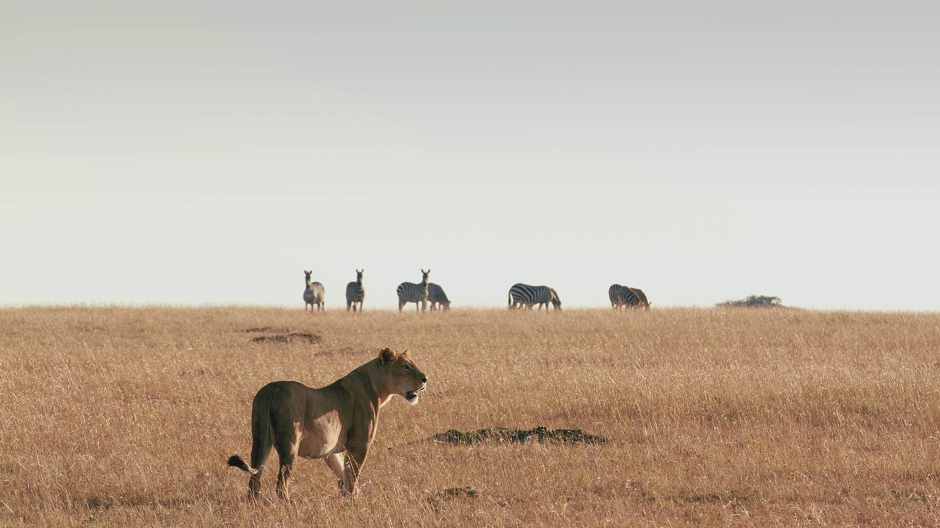 Kurz und knackig! Safari Highlights
