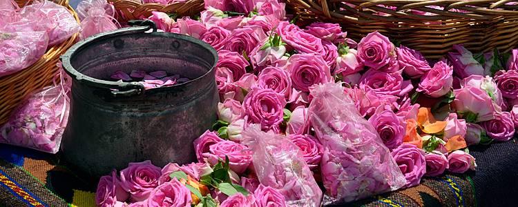 Paseo en el país de la rosa