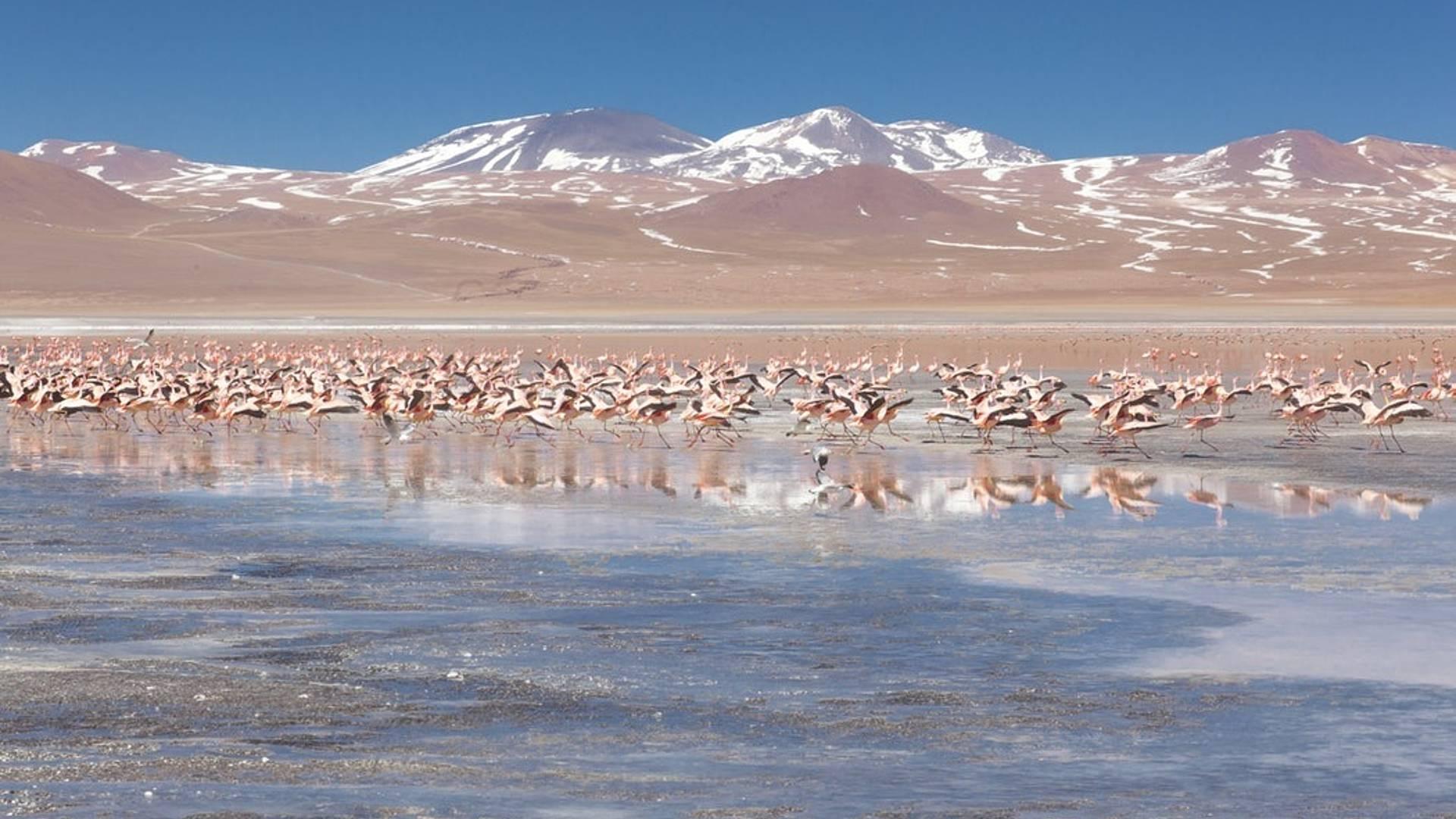 Città coloniali, deserti e lagune dal lago Titicaca al salar di Uyuni
