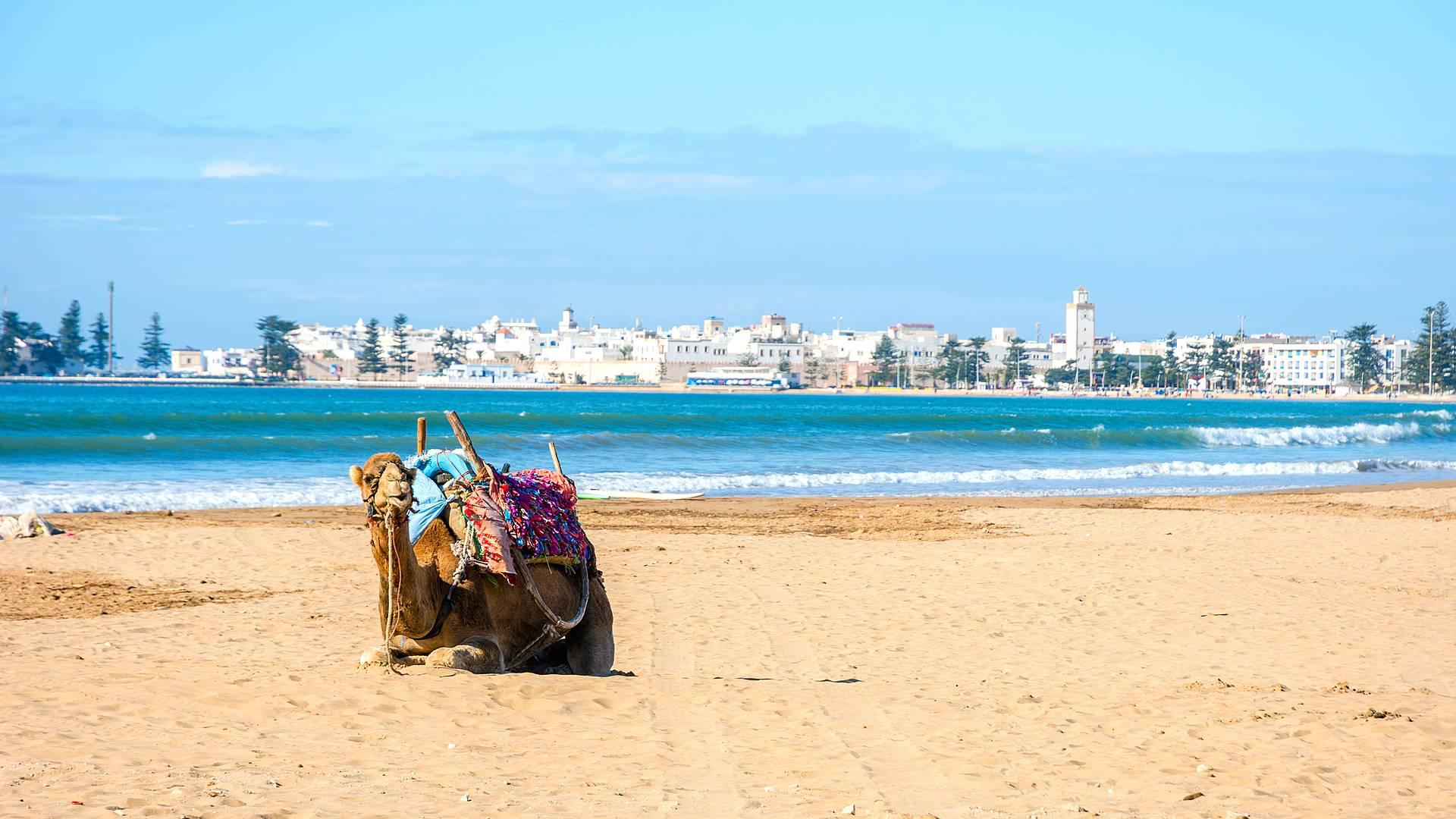 Verano entre playas y desierto
