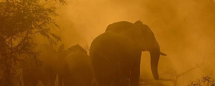 Meraviglioso safari fotografico tra Sud Africa e Botswana