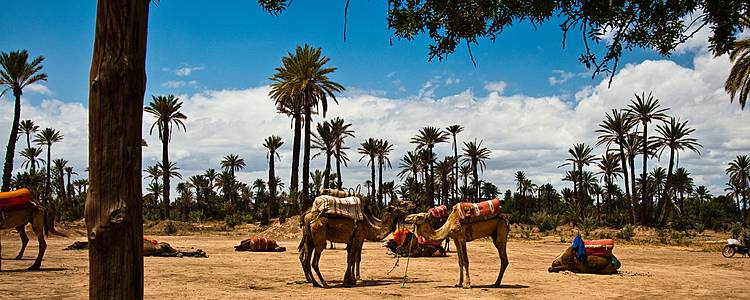 Contrastes entre dunas y playas