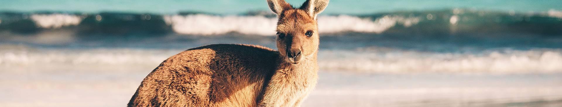 Wildlife tours in Australia