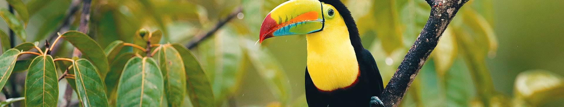 Rainforest tours in Belize