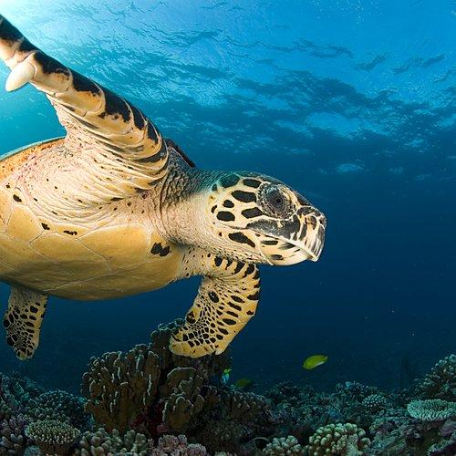 Safaris et plongées Afrique du Sud et Mozambique -