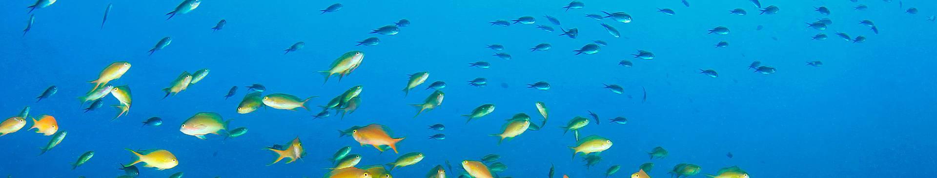 Plongée & Snorkeling aux Philippines
