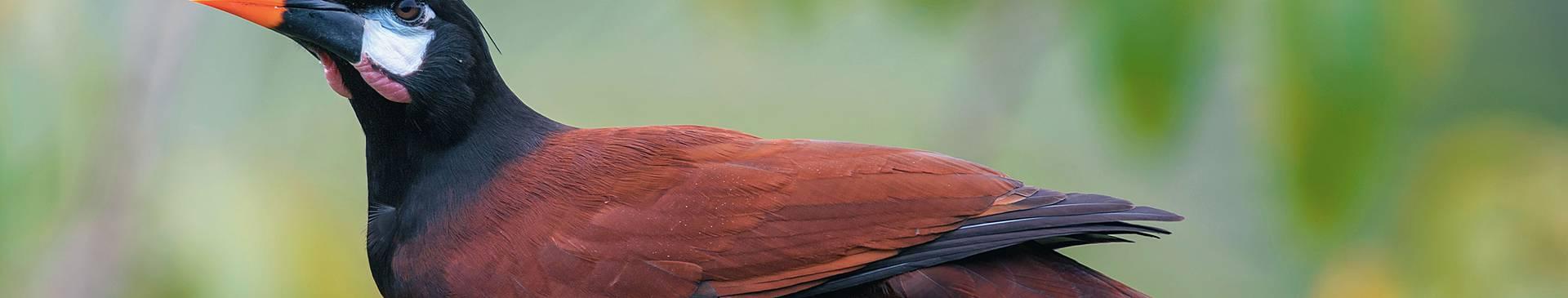 Birdwatching holidays in Costa Rica