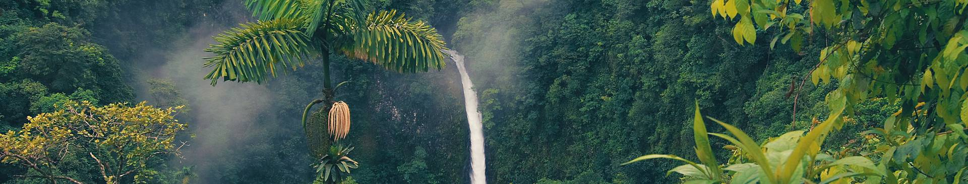 Rainforest tours in Costa Rica