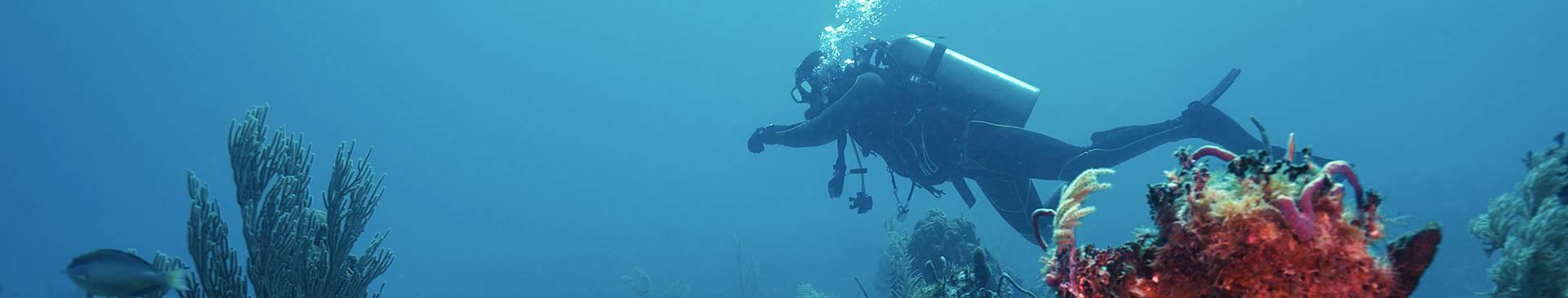 Plongée & Snorkeling à Cuba