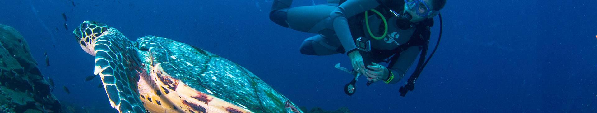 Plongée & Snorkeling en Indonésie